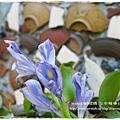 楓樹社區誠實商店 (43)