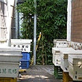 宏基蜜蜂生態農場 (26)