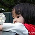 日月潭孔雀園 (24)