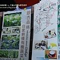 大崙山茶園&銀杏森林 (69)