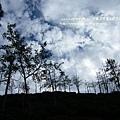 大崙山茶園&銀杏森林 (88)