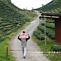 大崙山茶園&銀杏森林 (95)