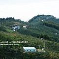 大崙山茶園&銀杏森林 (91)
