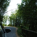 大崙山茶園&銀杏森林 (183)