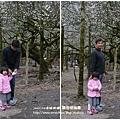 信義賞梅趣羅娜村秘境 121 (083)