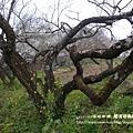 信義賞梅趣 烏松崙410 (7)