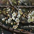 信義賞梅趣 羅娜村057 (16)