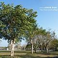 溪州公園隨拍 (19)
