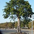 溪州公園隨拍 (92)