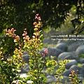 溪州公園隨拍 (128)