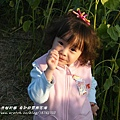 年初四 莿桐向日葵花海 (22)