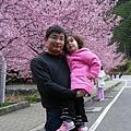 武陵賞櫻花 醫療站遊客中心前 (31)