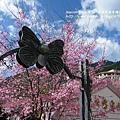 武陵賞櫻花 醫療站遊客中心前 (108)