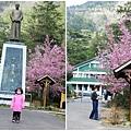 武陵賞櫻花-醒獅園行政中心篇 (027)