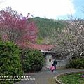 武陵賞櫻花-醒獅園行政中心篇 (38)
