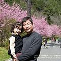 武陵賞櫻花 -管理站警察小隊前 (9)