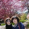 武陵賞櫻花-賞蝶賞鳥步道 (13)