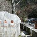 武陵賞櫻花_七家灣溪觀魚臺 (13)