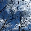 武陵賞櫻花 -雪山登山口篇 (30)