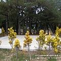 福壽山農場-天池達觀亭 (114)