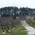 果樹觀察區鴛鴦湖步道 601 (23)