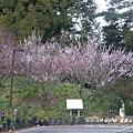 果樹觀察區鴛鴦湖步道 601 (71)