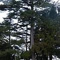 果樹觀察區鴛鴦湖步道 601 (68)