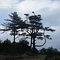 福壽山農場 露營區 (192)