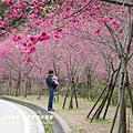 武陵賞櫻出發篇- (76)
