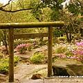 陽明山杜鵑花開 (62)