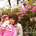 陽明山杜鵑花開 (72)