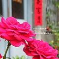 海安路藍晒圖神農街 (73)