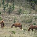 墾丁牧場 (35)