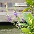 墾丁天鵝湖渡假湖畔飯店 (231)