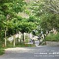 藤山步道賞桐去 (17)
