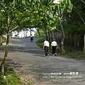 藤山步道賞桐去 (28)