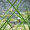 福山植物園046 (22)
