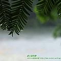 福山植物園046 (30)