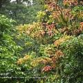 福山植物園046 (61)