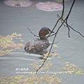 福山植物園046 (148)
