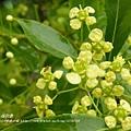 福山植物園046 (152)