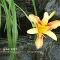 下一站幸福~望龍埤 (82)
