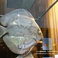 草屯人本自然七彩魚餐廳 (68)