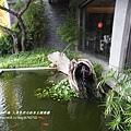 草屯人本自然七彩魚餐廳 (114)