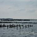 七股遊潟湖 (31)