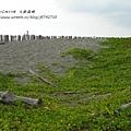 七股遊潟湖 (74)