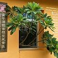 安平樹屋 (4)