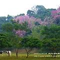 日月山景休閒農場 (104)