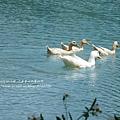 花蓮夢幻湖 (11)