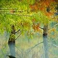 花蓮夢幻湖 (80)